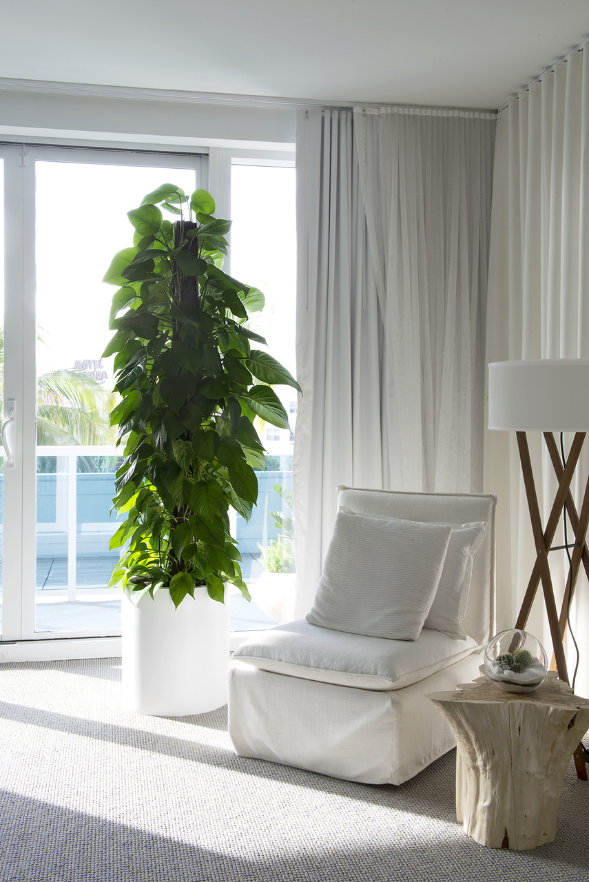Indoor Plants for Luxury Apartments - Plant The Future