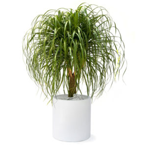 Beautiful Indoor Plants That Will Last for Years