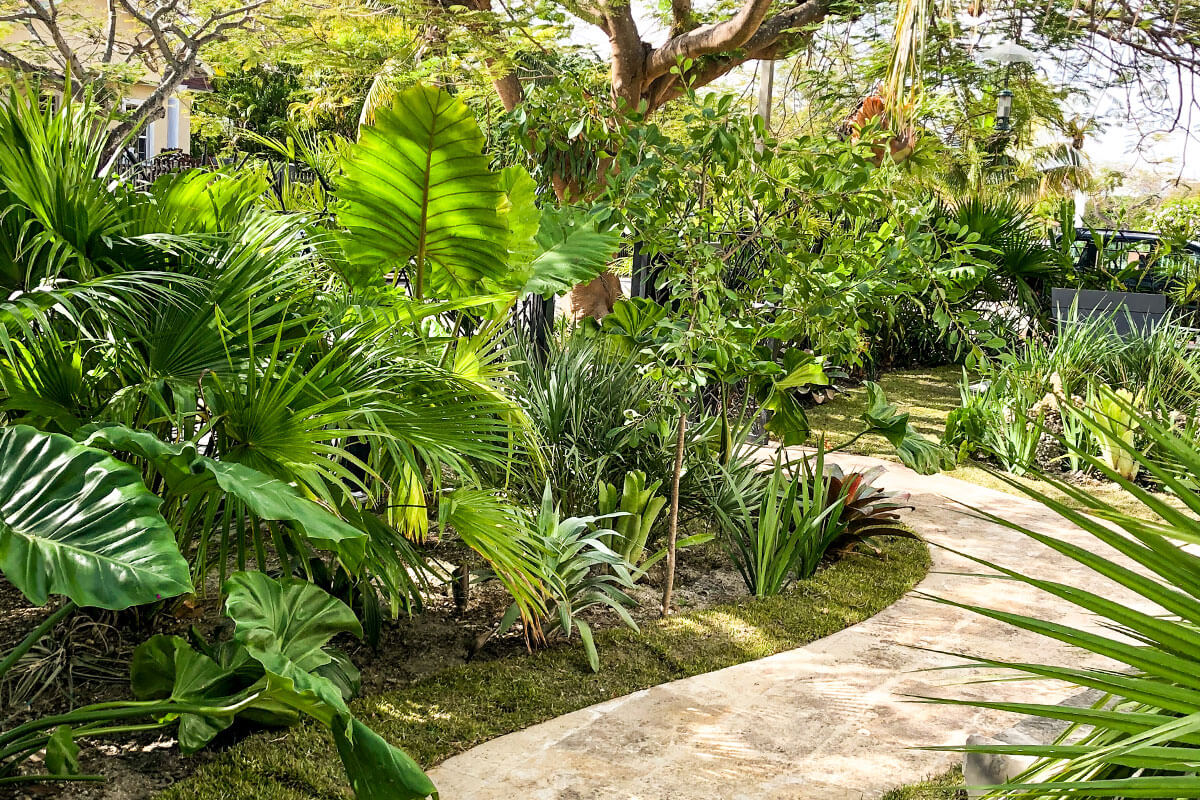 Tropical Landscape Design Private Residence Plant The