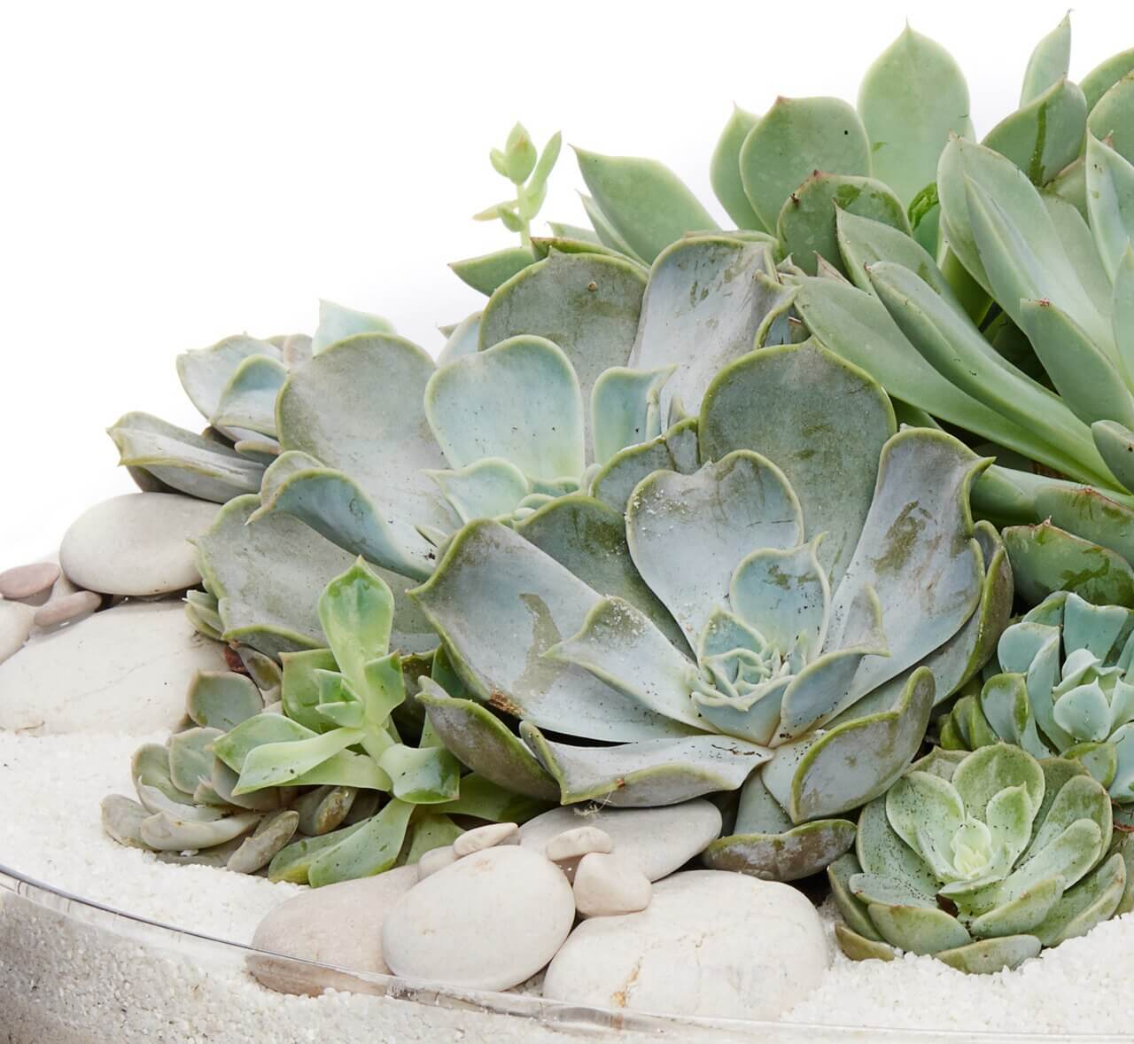 Succulent Care Guide: 3 Simple Instructions To Follow